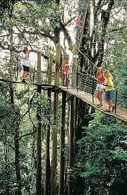 Tree top Walk amidst the rainforest canopy