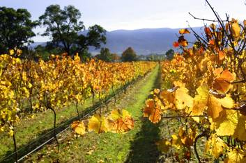 1 Day Yarra Valley Wine & Local Produce Tour